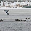 #ptaki #przyroda #czapla #jezioro