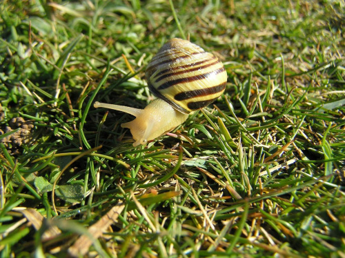 #ślimak #trawa #natura