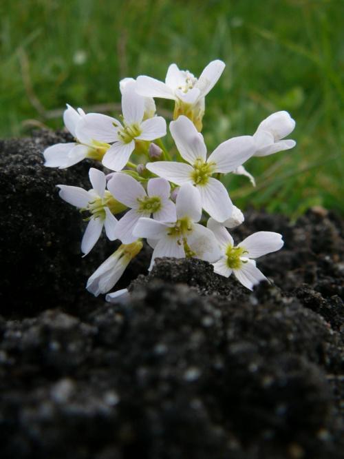 Kwiat... #kwiat #roślinność