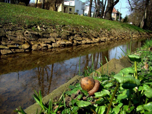 od jesieni do wiosny #Wrocław #wiosna