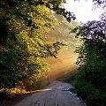 #droga #las #światło #promienie