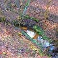 #Strumyk #Potok #Las #Przyroda