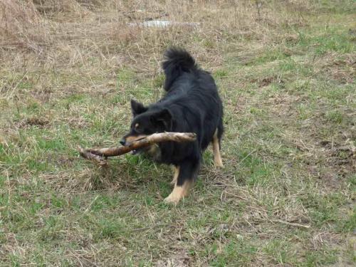 #psy #zwierzęta
