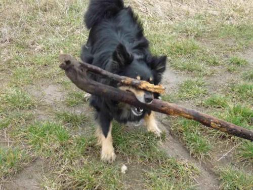 Nic nie widzę! Kto mi zasłonił oczy! #psy #zwierzęta