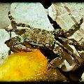 krab i pestka #budapeszt #chorwacja #krab #miasteczko #widok