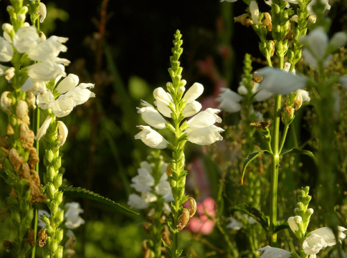 kwiaty w ogrodzie #przyroda #ogrody