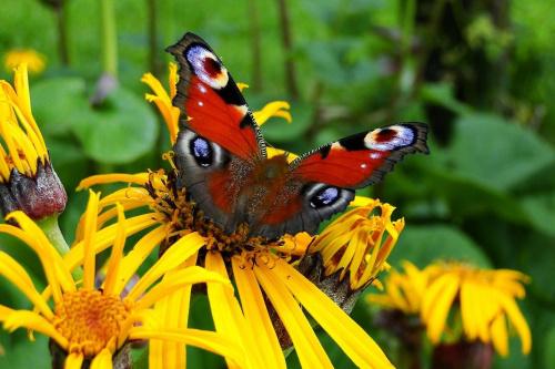 Motylek:) #Motyl #Owady