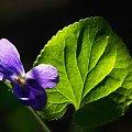 płatek #kwiatek