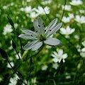 Kwiatek. #Kwiatek